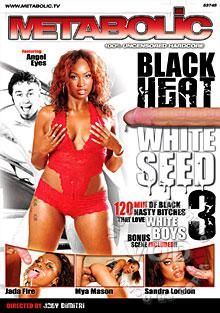 Black Heat White Seed 3 Box Cover