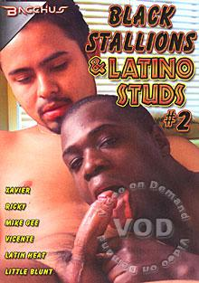 Latino studs Hot